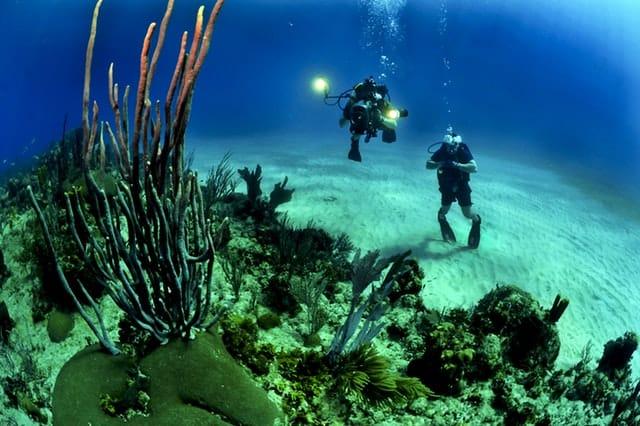 divers scuba reef underwater 37542